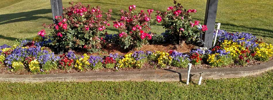 Winter annuals planted in a landscaping bed in front of a home in Wrens, GA.