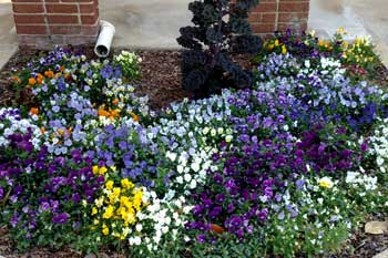 Annual flowers planted at a property in Waynesboro, GA.