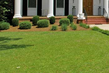 Front lawn in Wrens, GA mowed by Nichols Lawn Care.